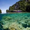 Jaya: Indonesia liveaboard diving tours