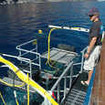 M/V Islander diving cages off Guadalupe Island