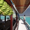 Go bananas on your Maldives diving cruise