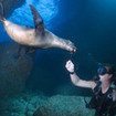 Encounter playful sea lions and more when diving Galapagos.