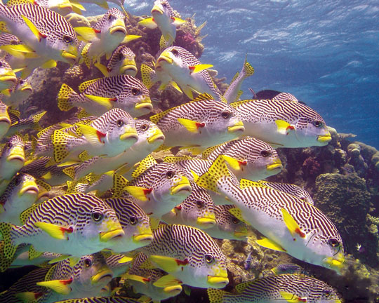 Diving At Ribbon Reefs Great Barrier Reef Dive The World Vacations