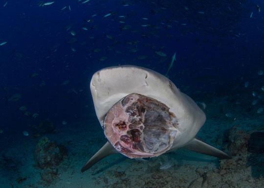 Island View Resort Sharks Bay Website