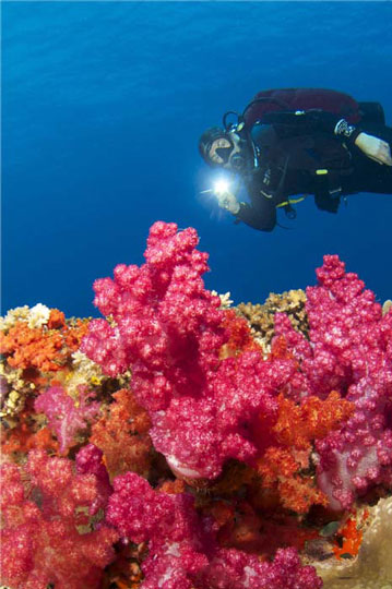 Diving In Rakiraki Viti Levu Fiji Dive The World Vacations