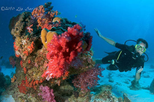 Diving in similan islands thailand dive the world vacations - Where to dive in thailand ...
