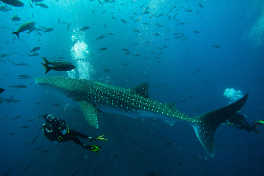 Best Dive Islands In The World