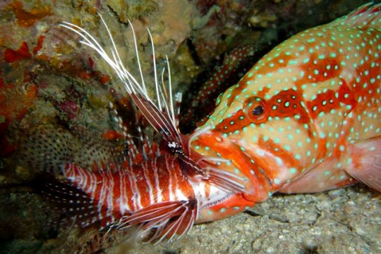 Phuket Resort Diving: Accommodation Options and Travel ...