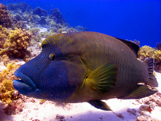 Scuba Diving In Egypt - Red Sea