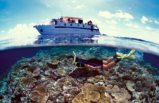 Diving at ribbon reefs great barrier reef dive the world vacations - Dive great barrier reef ...