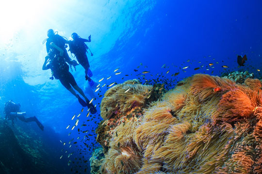 Diving In Koh Samui Thailand Dive The World Vacations