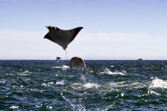 Scuba Diving In Sea Of Cortez Mexico Dive The World