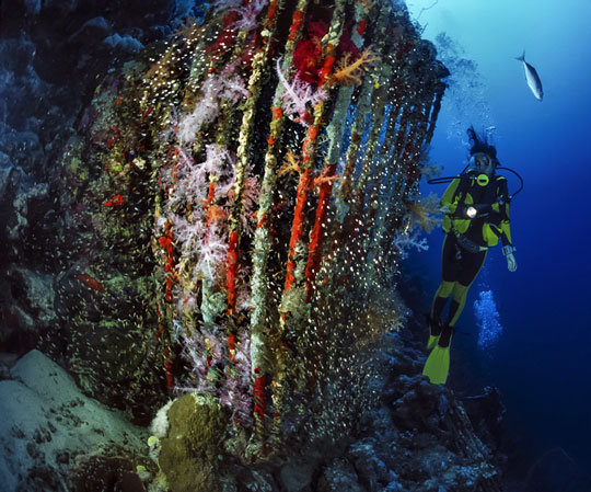 Liveaboard Diving Cruises in Red Sea: Egypt and Sudan ...