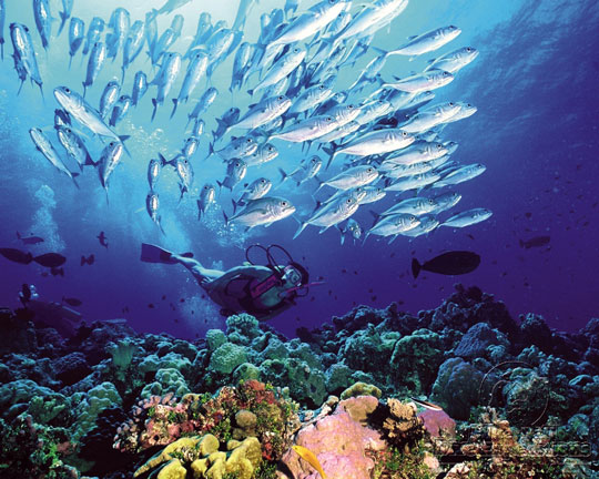 Scuba diving in australia dive the world vacations - Dive great barrier reef ...