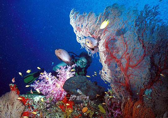 Diving in phuket thailand dive the world vacations - Where to dive in thailand ...