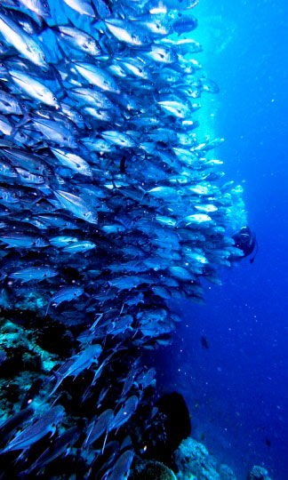Scuba diving in malaysia dive the world vacations - Sipadan dive sites ...