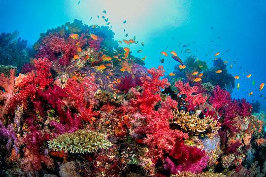Diving in Taveuni: Somosomo Strait, Fiji