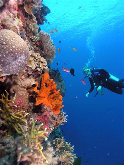 Scuba diving in cairns great barrier reef dive the world vacations - Dive great barrier reef ...