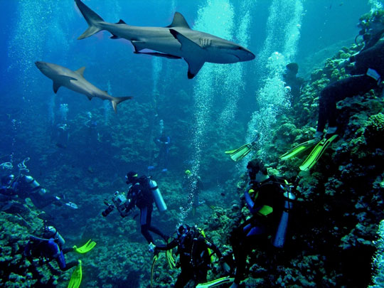 Diving at osprey reef coral sea australia dive the world vacations - Dive great barrier reef ...