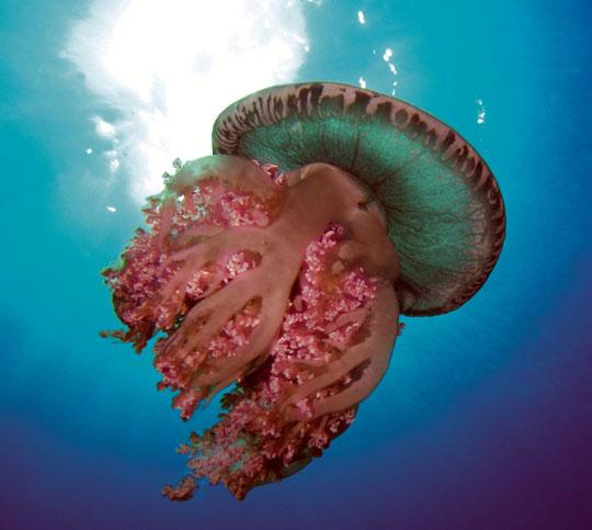 The World's Best Scuba Diving Destinations: The Dive Sites