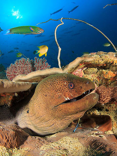 Moray Eels Bite—But Are They Poisonous? (Full Article)