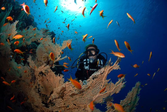 duiken marsa alam