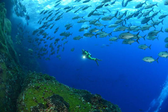 Best Guide To Diving In Socorro Mexico