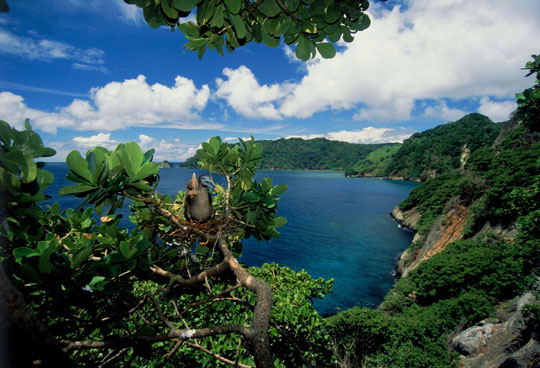 Liveaboard Diving Cruises In Cocos Island Costa Rica Dive The World