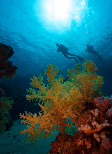 Diving in sharm el sheikh sinai peninsula ras mohamed red sea egypt beautiful scene of a coral reef with divers off sharm el sheikh egypt gumiabroncs Choice Image