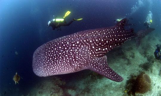 Diving in sipadan island sabah malaysian borneo south - Sipadan dive sites ...