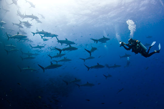 Scuba Diving In Mexico Dive The World Vacations