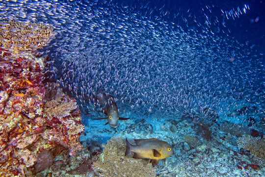 Scuba diving in egypt red sea dive the world vacations - Dive inn resort egypt ...
