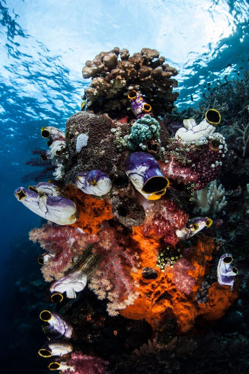 Diving in raja ampat west papua indonesia dive the world vacations - Raja laut dive resort ...