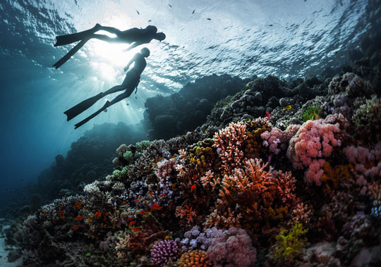 Red Sea Scuba Diving Holidays In Egypt And Sudan