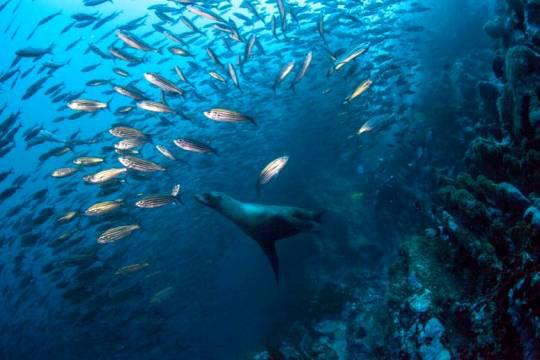 scuba diving in galapagos islands  ecuador
