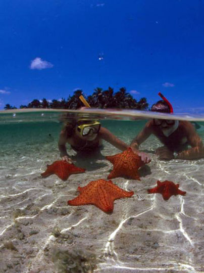 Diving in ambergris caye belize hol chan shark ray alley and more - Ambergris dive resort ...