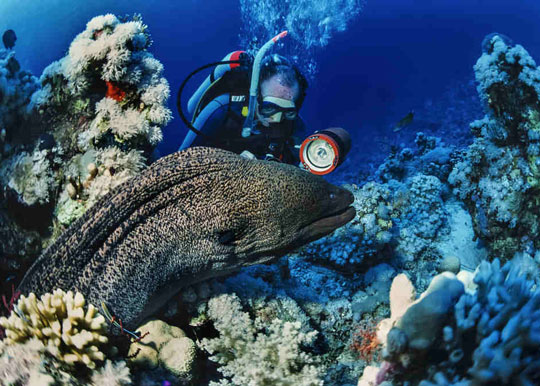 The World S Best Scuba Diving Destinations Dive The World