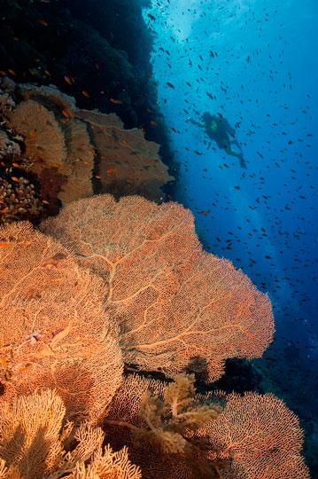 Diving At Elphinstone, Marsa Alam, Egypt