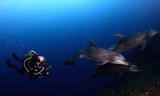 diving in socorro  mexico