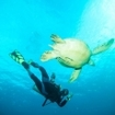 Swim with turtles at Bunaken Island, North Sulawesi