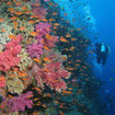 Swim with colourful reef fish and corals at Viti Levu