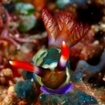 The superb macro life of Indonesia's Triton Bay