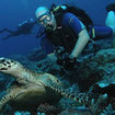 PADI Adventure Diver Course - marine life identification