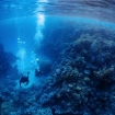 Diving in the Southern Red Sea