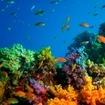 Colourful soft coral scenes. Diving at Baa Atoll in Maldives