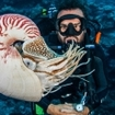 A diver spots a nautilus in the Coral Sea