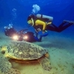 A Chelonia mydas feeds on sea grass at Marsa Shona in Egypt's Red Sea