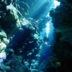 Diving a canyon on Kadavu Island
