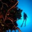 Diving on the famous walls of West Caicos
