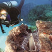 More marine life to see in PADI Discover Scuba Diving