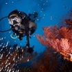 Scuba diver among fish and coral, Sumbawa, Indonesia