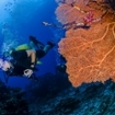 A diver swims past a gorgonian fan, Khao Lak